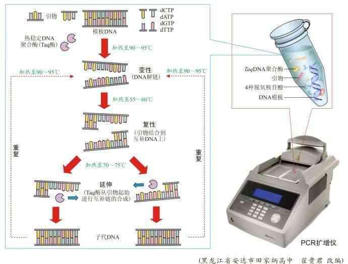 pcr反应流程图